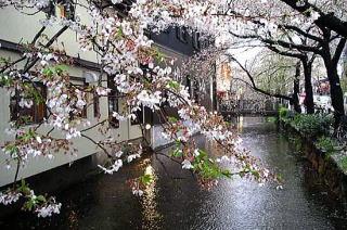 Kiyooto4111_036