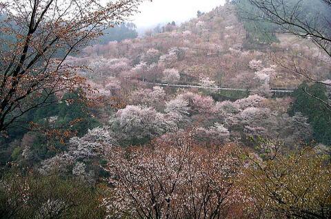 Kiyooto41121_027