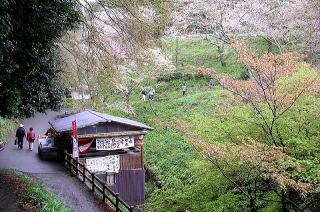 Kiyooto41121_077