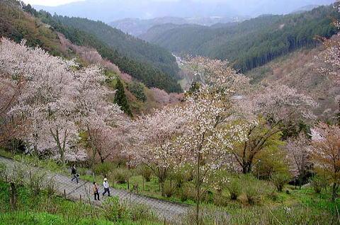 Kiyooto4112_055
