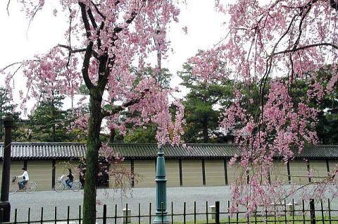 Kiyooto4113_028