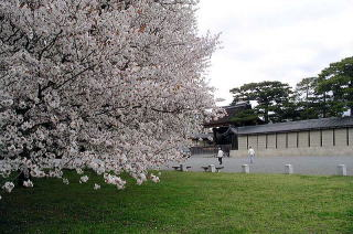 Kiyooto4113_053