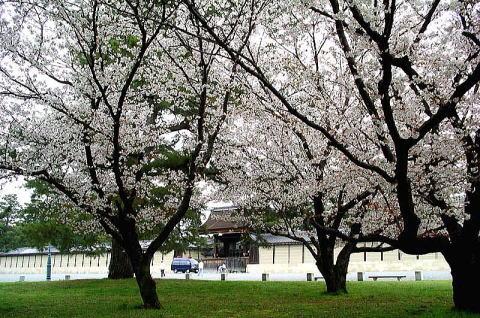 Kiyooto4113_054
