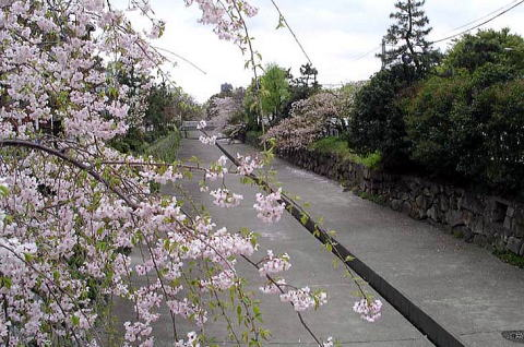 Kiyooto4113_059
