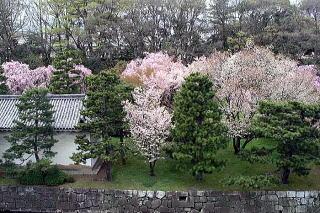 Kiyooto4113_083